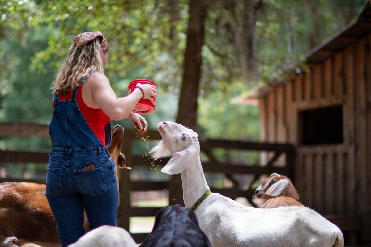 Wedding Goats Farm