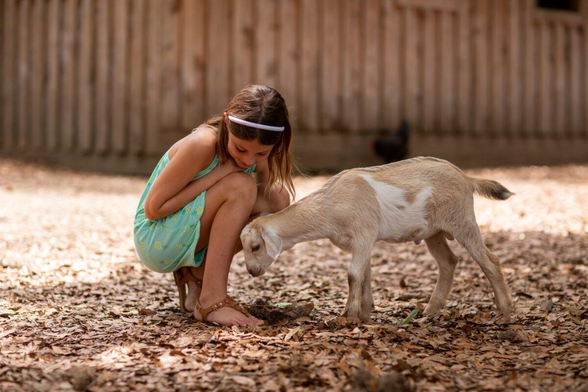 Daufuskie Island Community Farm Girl Goat